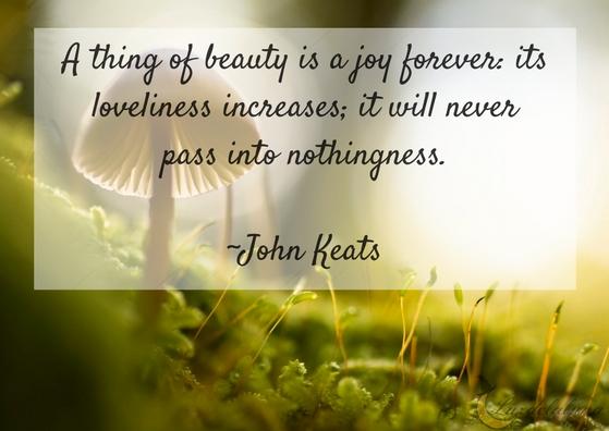 beauty quotes luzdelaluna