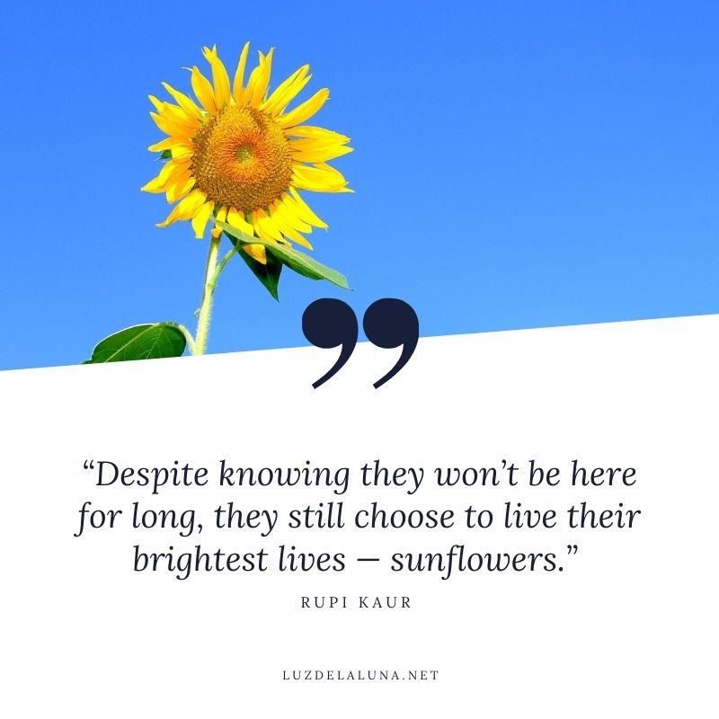 sunflower sayings